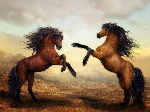 мир конного спорта